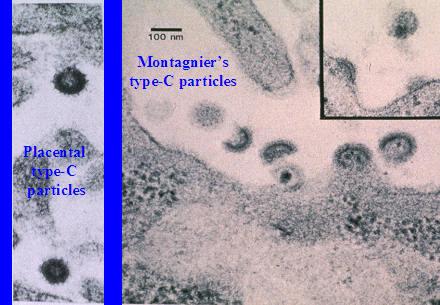 oncovirus auspicate betoken